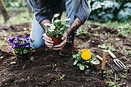 Man planting flowers in his garden - JRFF01272