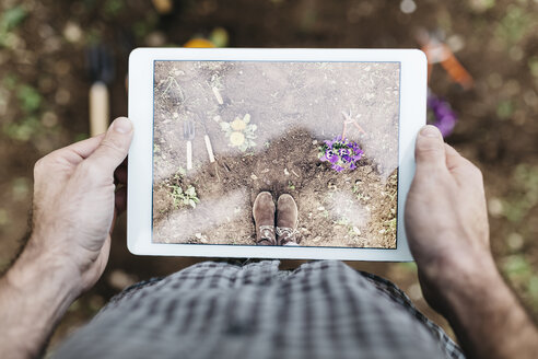 Man taking photographs with a tablet of flowers planted in garden - JRFF01281