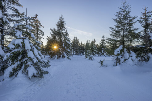 Germany, Lower Saxony, Harz National Park, winter landscape in the evening - PVCF01025