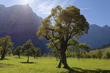 Austria, Tyrol, trees in front of Karwendel Mountains in autumn - LBF01594
