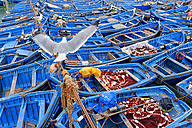 Morocco, Essaouira, bue fishing boats in the harbour - DSGF01623