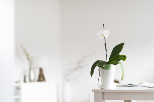 Orchid on table at home - CHPF00375