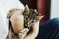 Eight week old tortoiseshell kitten being cuddled by a boy - NMSF00021