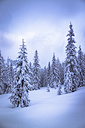 Austria, Hochkoenig, coniferous forest in winter - STCF00296