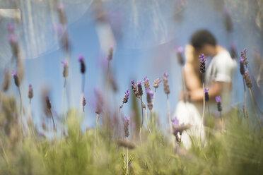 Romantic couple in lavender field - ZEF13235