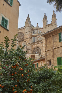 Spain, Mallorca, Palma, La Seu Cathedral with orange tree - BSCF00564