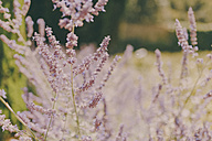 Flowers in the sunshine - NMSF00037