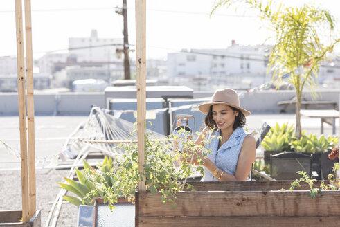 Woman watering her rooftop garden - WESTF22823