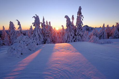 Germany, Bavaria, Bavarian Forest in winter, Great Arber, Arbermandl, snow-capped spruces, sunset - SIEF07375