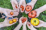 Hands of five people holding various sorts of tomatoes - TCF05362