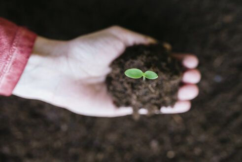 Hand holding sprout with garden soil - GEMF01575
