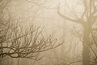 Italy, Umbria, Apennines, Motette, Forest on a foggy day in Winter - LOMF00535