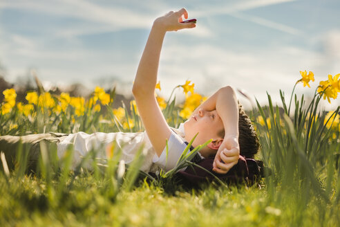 Boy lying in daffodil field looking at his cell phone - NMSF00042