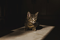 Tabby kitten at morning sunlight - NMSF00051