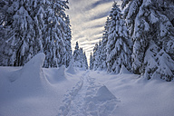 Germany, Lower Saxony, Harz National Park, winter landscape - PVCF01081