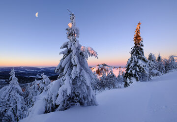 Germany, Bavaria, Bavarian Forest in winter, Great Arber, snow-capped spruces in the morning - SIEF07414