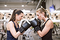 Young women boxing in gym - HAPF01553