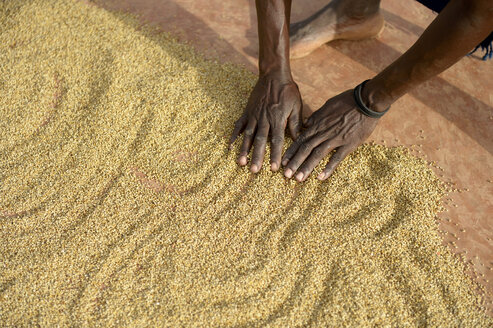 Burkina Faso, village Koungo, woman spreading out sorghum grains to dry in the sunshine - FLKF00801