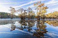 USA, Texas, Louisiana, Caddo Lake, Benton Lake, bald cypress forest - FOF09245