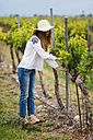 Woman checking the grapes plants - JPF00193