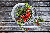 Tin bowl of rosehips on wood - GWF05206