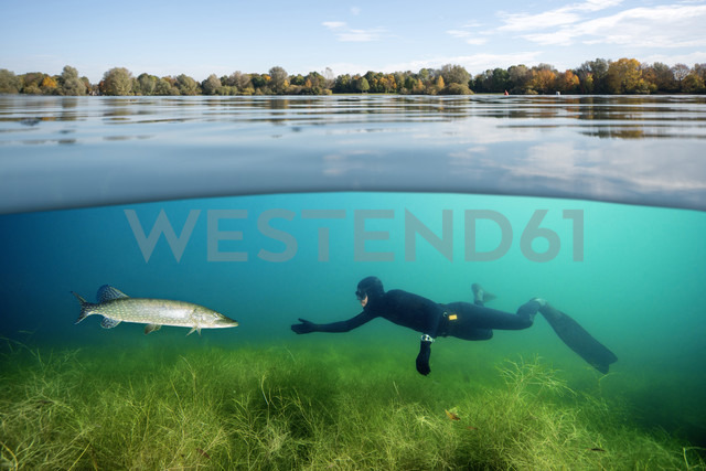 Diver and northern pike in a lake - GNF01378 - Gerald Nowak/Westend61