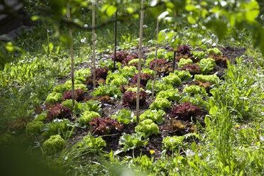 Organic garden - NDF00644