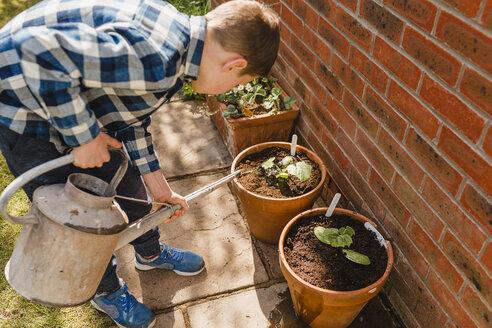 Boy watering seedling in flower pot - NMSF00119