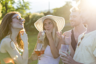 Four friends drinking and talking in the garden - ZOCF00351