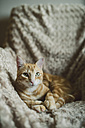 Portrait of ginger car lying on armchair - RAEF01877