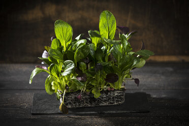 Japanese mustard spinach on wood - MAEF12206
