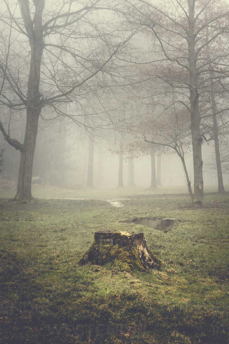 Tree stump and trees on a hazy morning - DWIF00851 - Dirk Wüstenhagen/Westend61