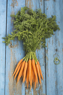 Bunch of carrots on blue wood - ODF01519