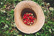 Straw hat full of strawberries on strawberry field - GEMF01663