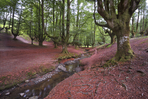 Spain, Basque Country, Gorbea Natural Park, Otzarreta forest - DHCF00073