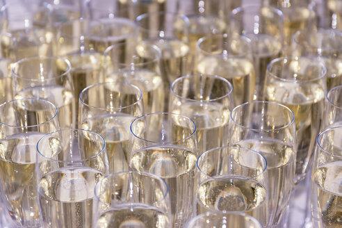 Sparkling champagne glasses - SMAF00753