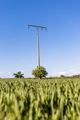 Field and power line - EGBF00238