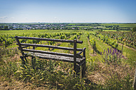 Germany, Westhofen, vineyards with bench in the foreground - KEBF00570