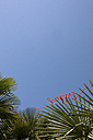 Word happy on palm tree under blue sky - PSTF00040