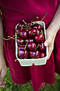 Girl's hands dress holding cardboard box of cherries, close-up - LVF06177
