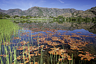 Spain, Castilla Leon, Zamora Province, Lago de Sanabria Nature Reserve - DSGF01680