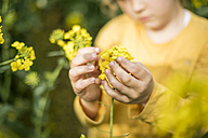 Close-up of girl examining plant in rape field - MOEF00011