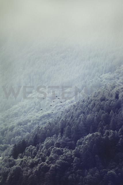 Italy, Lombardy, Chiesa in Valmalenco, Mountainsides in morning fog - DWIF00866