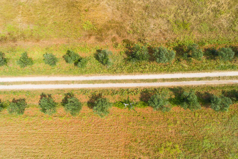 Aerial view of row of olive trees - MAEF12353
