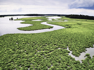 USA, Virginia, Marshes of the Chickahominy River - BCDF00298
