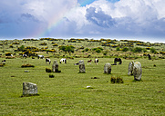 UK, Cornwall, Bodmin Moor, stone circle 'The Hurlers' - SIEF07459