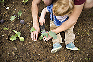 Father with his little son in the garden planting seedlings - HAPF02006