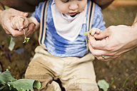 Father with his little son in the garden planting seedlings - HAPF02009