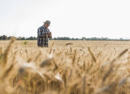 Senior farmer in a field examining ears - UUF11166