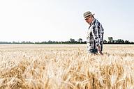 Senior farmer in a field examining ears - UUF11169